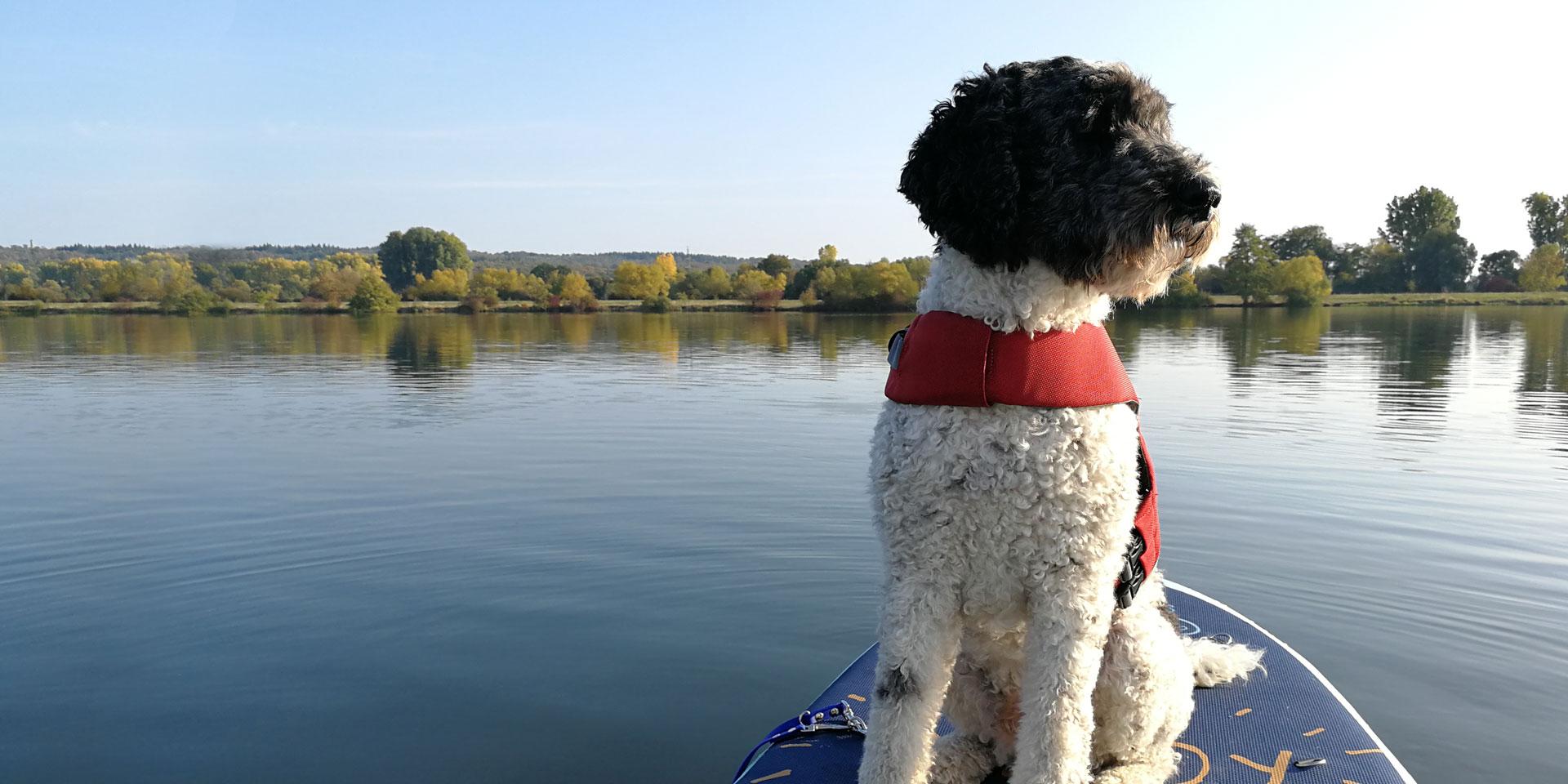stand-up-paddling-Smartie-auf-Tour