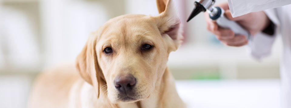 parasitenbefall-hund-uebersicht-tipps
